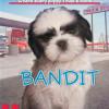 """Bandit"", By Ellen Miles"