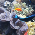 Colorful fish at Monterey Bay Aquarium