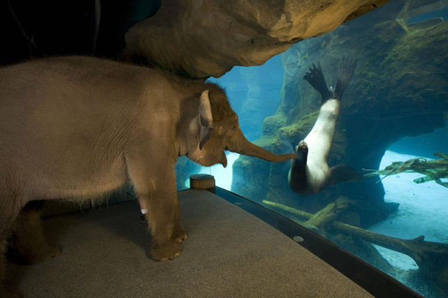 elephant and sea lion