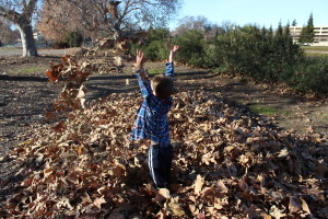 throwing up leaves