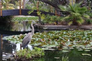 heron at paradise point